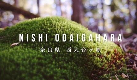 奈良県国立公園「西大台ヶ原」2015年版公式プロモーションムービー