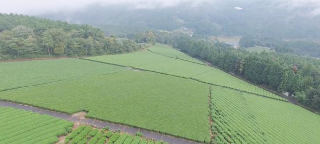 奈良県「大和茶」の魅力を伝えるプロモーション動画