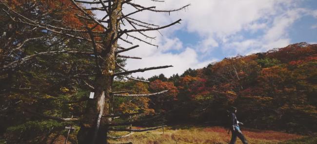 西大台ケ原の観光プロモーション動画