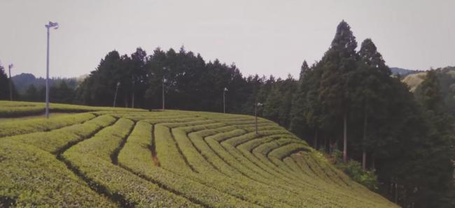 大和茶プロモーション動画のドローンでの空撮